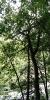 2021_07_01 B70 Baum